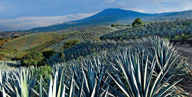 Resultado de imagen para pueblo tequila