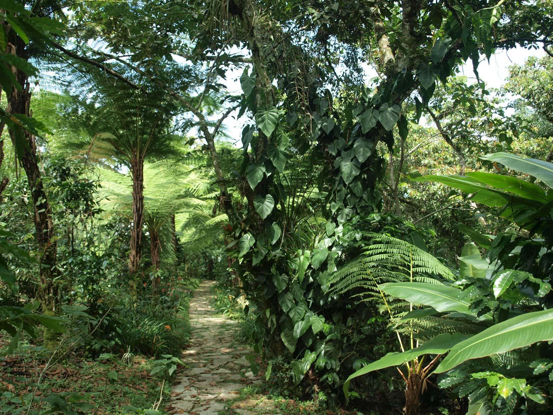 De paseo en el jard n bot nico xoxoctic en puebla for Jardin botanico contacto