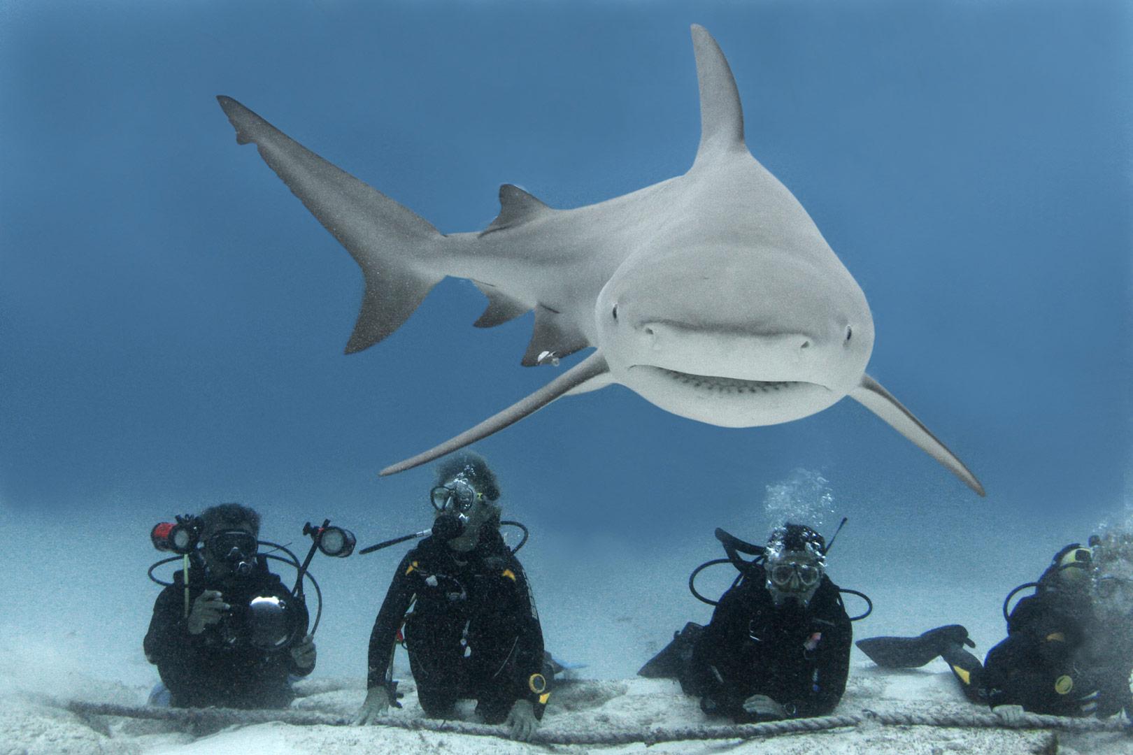 Buceo extremo con el Tiburón Toro