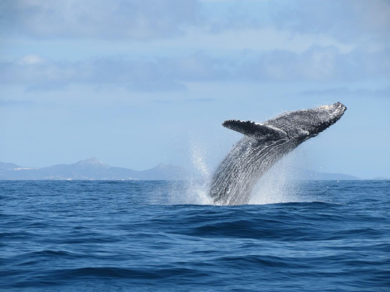 La ballena gris un espect culo para recordar for Noticias del espectaculo mexicano recientes